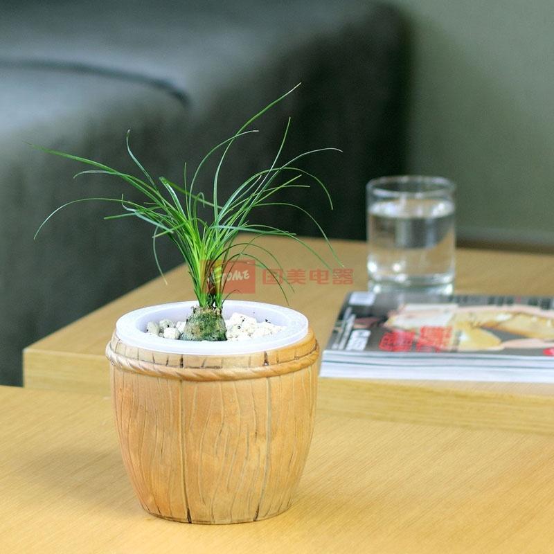 室内桌面盆景花卉绿植
