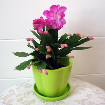 室内手绘绿色植物