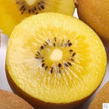 新鲜水果新西兰金果黄心猕猴桃绿果1个150克只要13元满50包邮限北京天图片